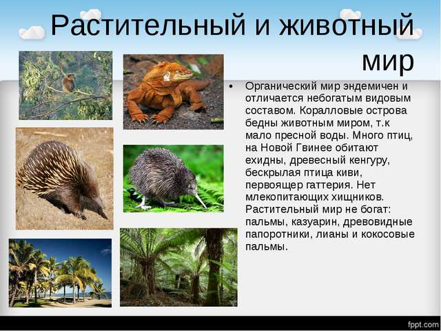 Растительный и животный мир Органический мир эндемичен и отличается небогатым...