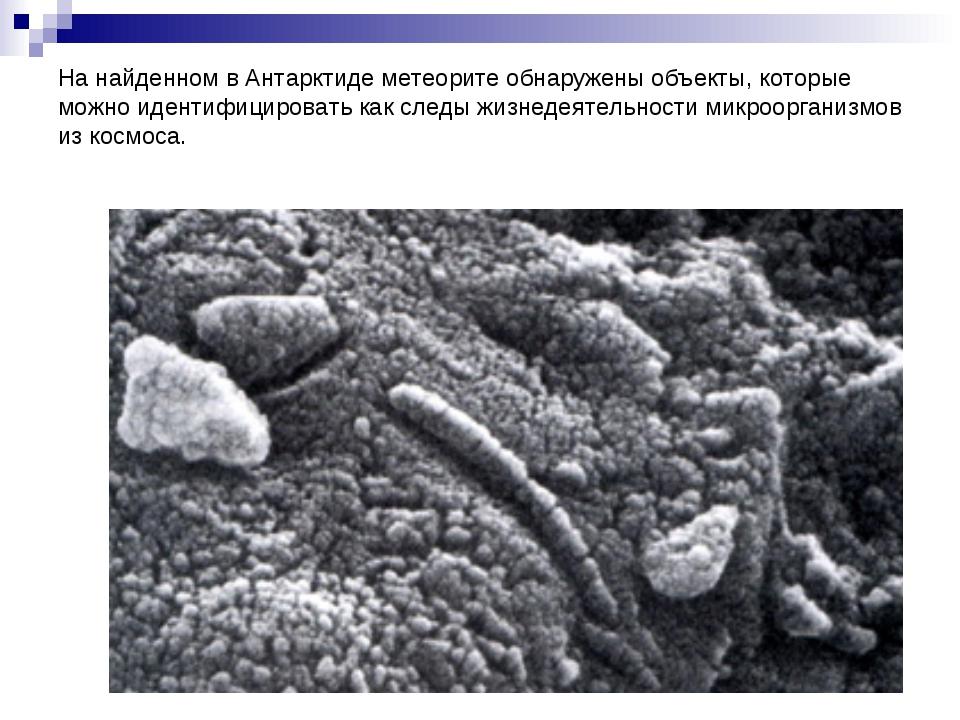 На найденном в Антарктиде метеорите обнаружены объекты, которые можно идентиф...