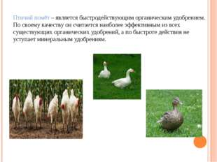 Птичий помёт – является быстродействующим органическим удобрением. По своему