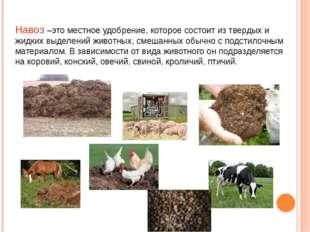 Навоз –это местное удобрение, которое состоит из твердых и жидких выделений ж