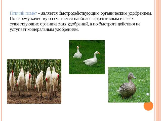 Птичий помёт – является быстродействующим органическим удобрением. По своему...