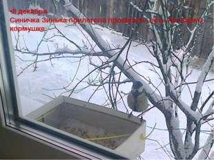 8 декабря. Синичка Зинька прилетела проверить, есть ли корм в кормушке.
