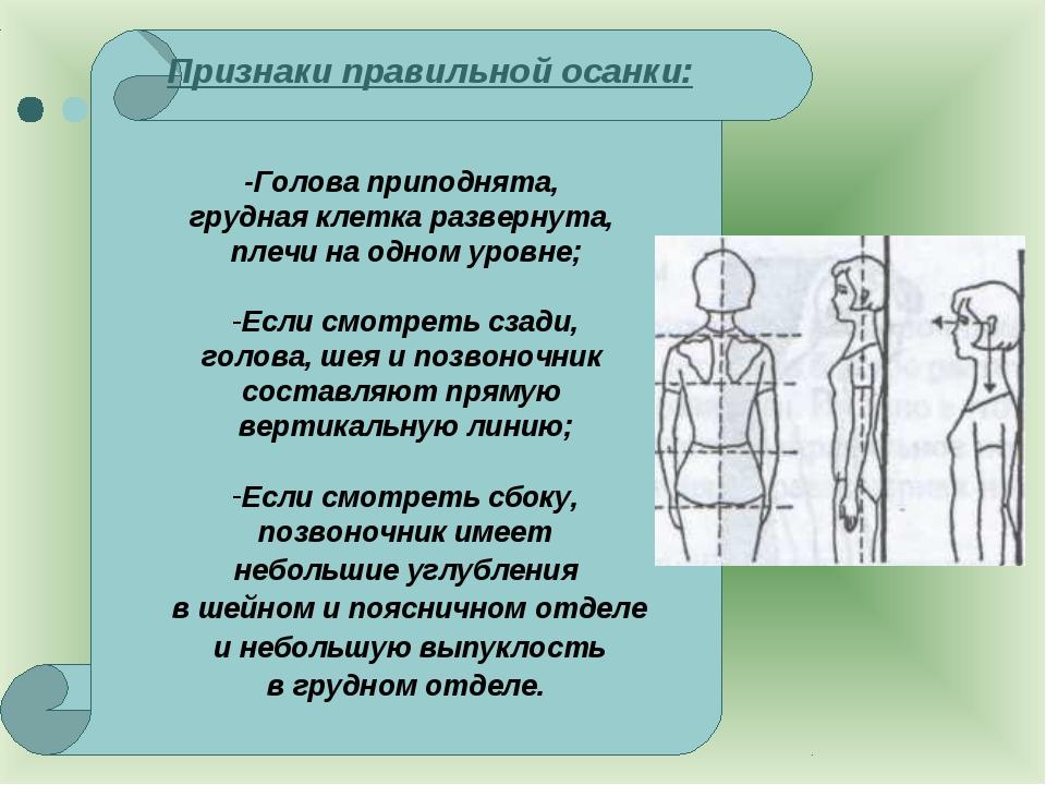 Признаки правильной осанки: -Голова приподнята, грудная клетка развернута, п...