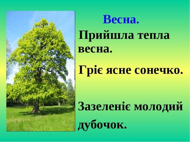Весна. Прийшла тепла весна. Гріє ясне сонечко. Зазеленіє молодий дубочок.