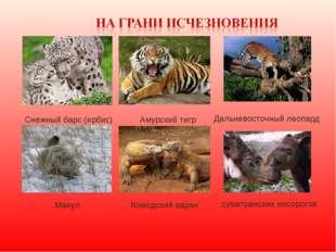 Cнежный барс (ирбис) Амурский тигр Дальневосточный леопард Манул Комодский ва
