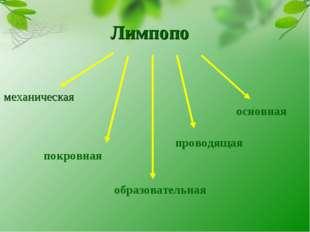 Лимпопо механическая покровная образовательная проводящая основная