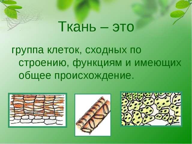 Ткань – это группа клеток, сходных по строению, функциям и имеющих общее прои...
