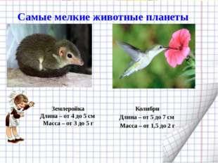 Самые мелкие животные планеты Землеройка Длина – от 4 до 5 см Масса – от 3 д