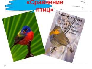 «Сравнение птиц»