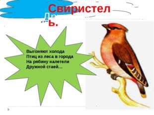 . Дружной стаей… Свиристель. Выгоняют холода Птиц из леса в города На рябину