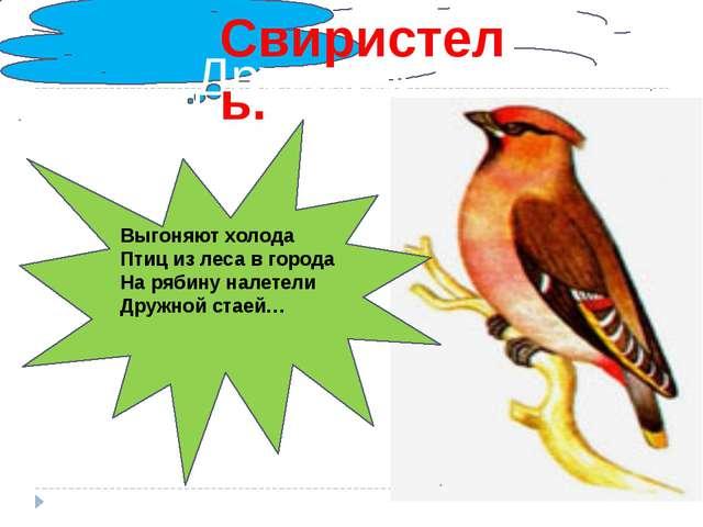 . Дружной стаей… Свиристель. Выгоняют холода Птиц из леса в города На рябину...