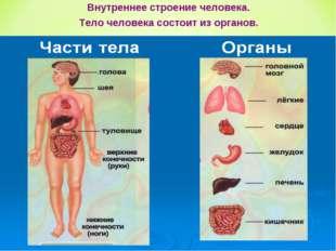 Внутреннее строение человека. Тело человека состоит из органов.