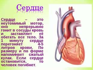 Сердце – это неутомимый мотор, оно непрерывно гонит в сосуды кровь и заставля