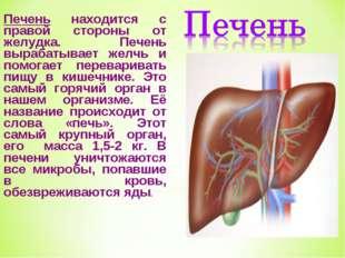 Печень находится с правой стороны от желудка. Печень вырабатывает желчь и пом