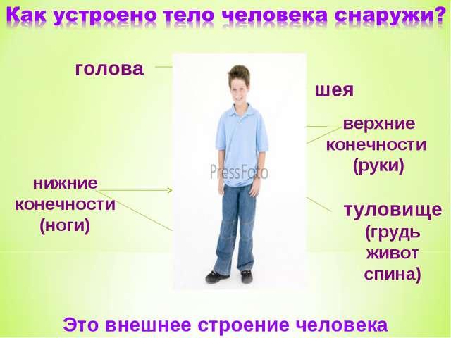 голова шея верхние конечности (руки) нижние конечности (ноги) туловище (грудь...