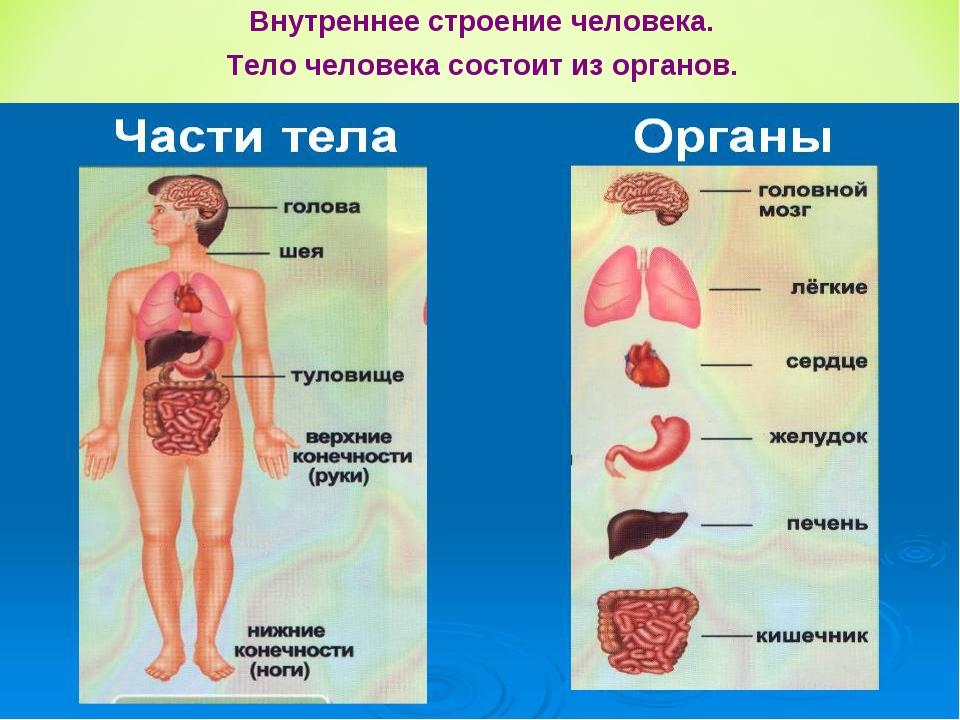 Человек с внутренними органами раскраска