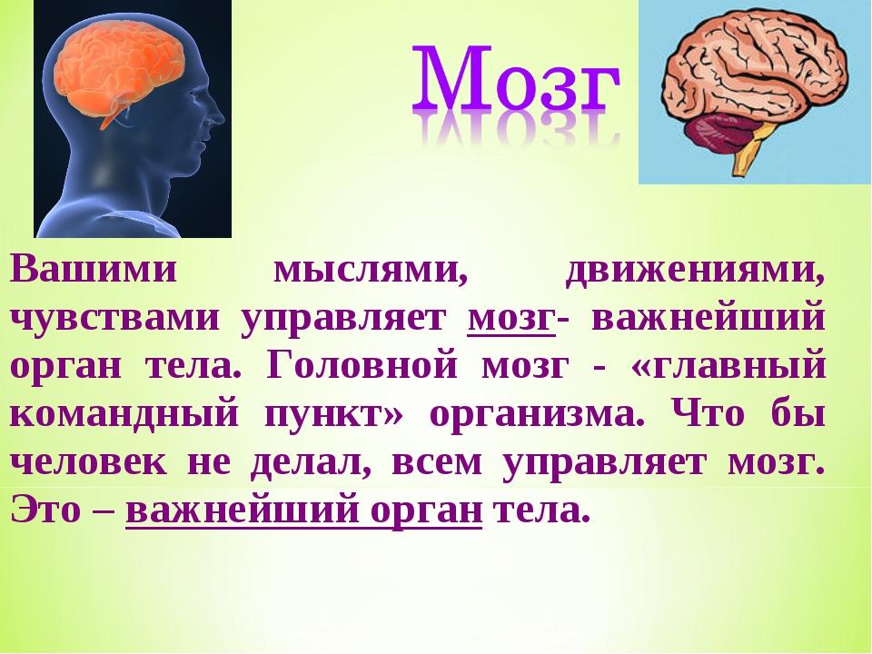 Вашими мыслями, движениями, чувствами управляет мозг- важнейший орган тела. Г...