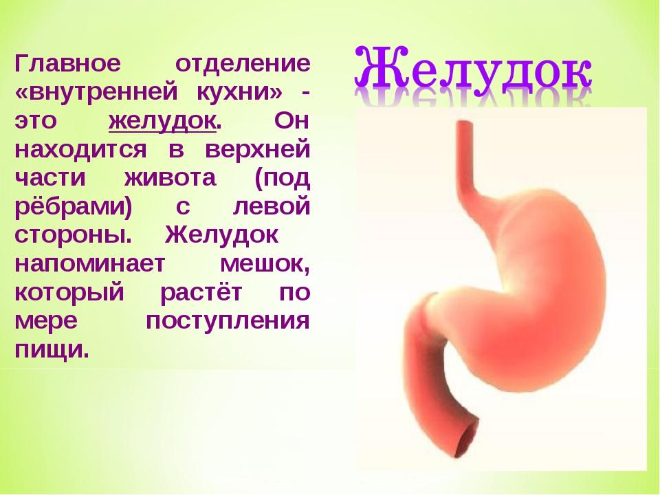 Главное отделение «внутренней кухни» - это желудок. Он находится в верхней ча...