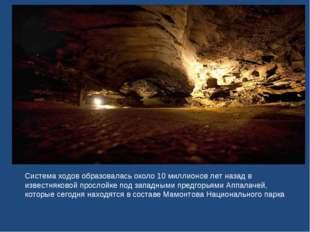 Система ходов образовалась около 10 миллионов лет назад в известняковой просл