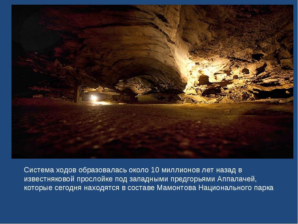 Система ходов образовалась около 10 миллионов лет назад в известняковой просл...