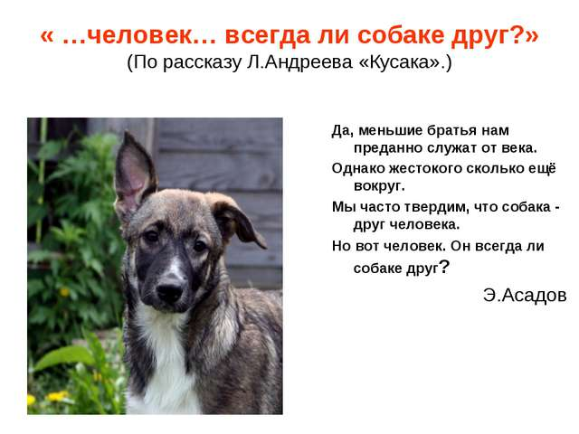 « …человек… всегда ли собаке друг?» (По рассказу Л.Андреева «Кусака».) Да, ме...