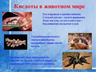Кислоты в животном мире Тропический паук педипальпида стреляет во врагов стру