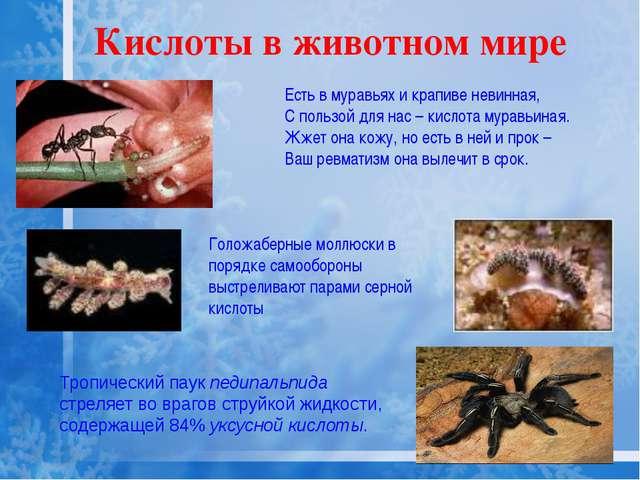 Кислоты в животном мире Тропический паук педипальпида стреляет во врагов стру...