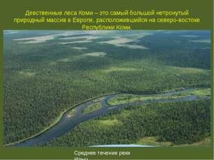 Девственные леса Коми – это самый большой нетронутый природный массив в Европ