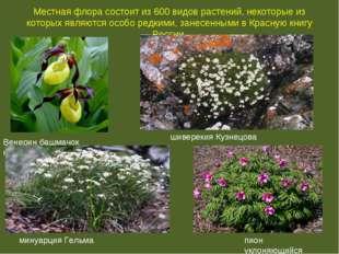 Местная флора состоит из 600 видов растений, некоторые из которых являются ос