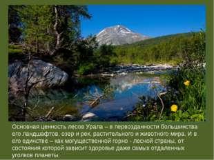 Основная ценность лесов Урала – в первозданности большинства его ландшафтов,