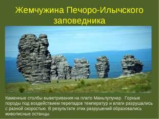Жемчужина Печоро-Илычского заповедника Каменные столбы выветривания на плато