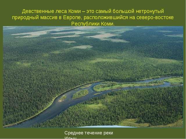 Девственные леса Коми – это самый большой нетронутый природный массив в Европ...