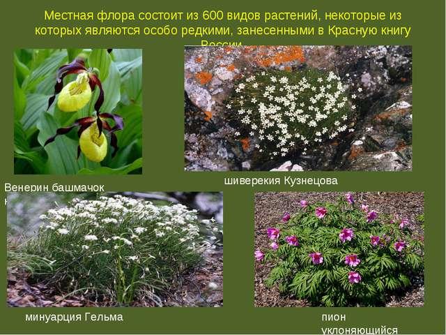Местная флора состоит из 600 видов растений, некоторые из которых являются ос...