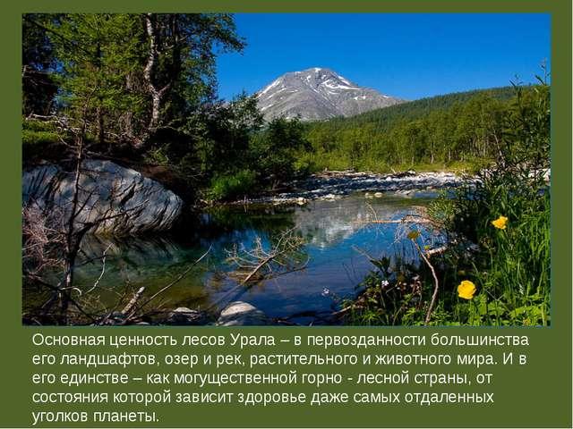 Основная ценность лесов Урала – в первозданности большинства его ландшафтов,...