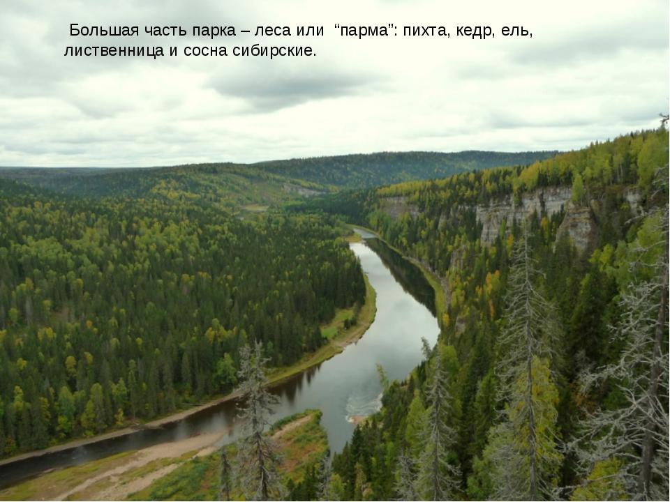 """Большая часть парка – леса или """"парма"""": пихта, кедр, ель, лиственница и сосн..."""