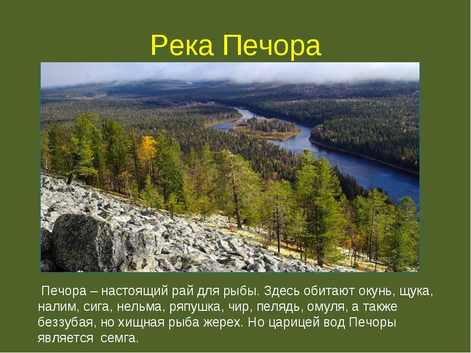 Река Печора Печора – настоящий рай для рыбы. Здесь обитают окунь, щука, налим...