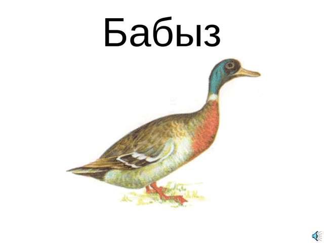 Бабыз