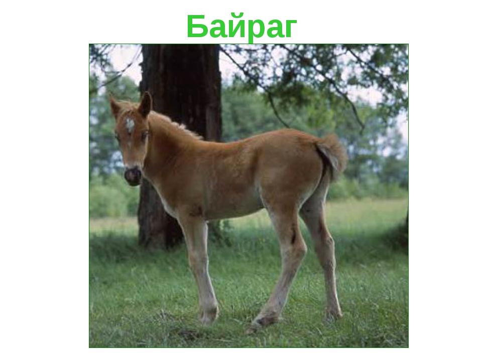 Байраг