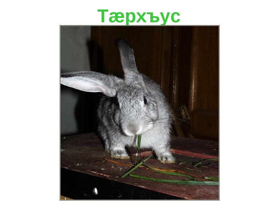 Тæрхъус