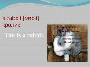 a rabbit [ræbit] кролик This is a rabbit.