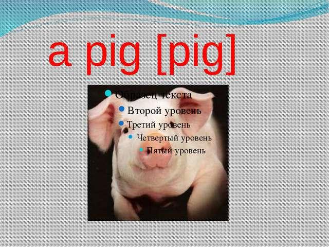 a pig [pig]