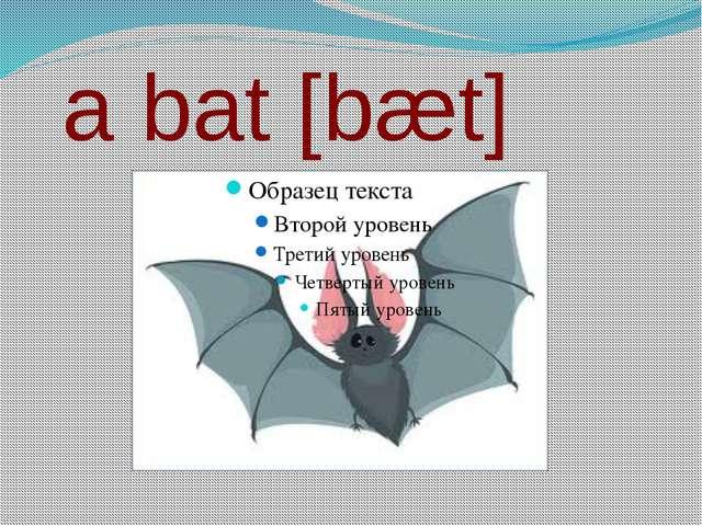 a bat [bæt]