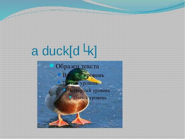a duck[dʌk]