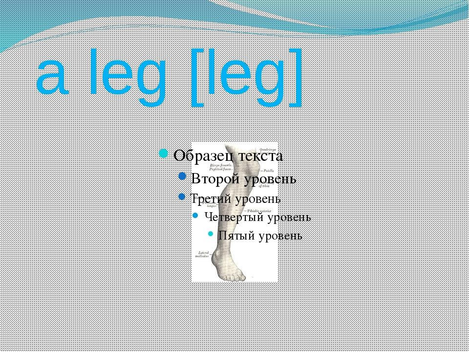 a leg [leg]