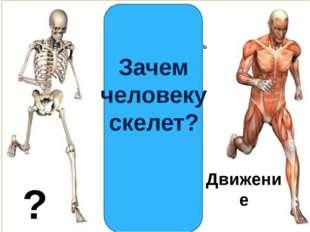 Движение ? Зачем человеку скелет?