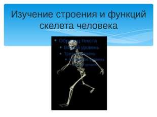 Изучение строения и функций скелета человека