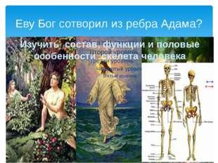 Еву Бог сотворил из ребра Адама? Изучить состав, функции и половые особенност