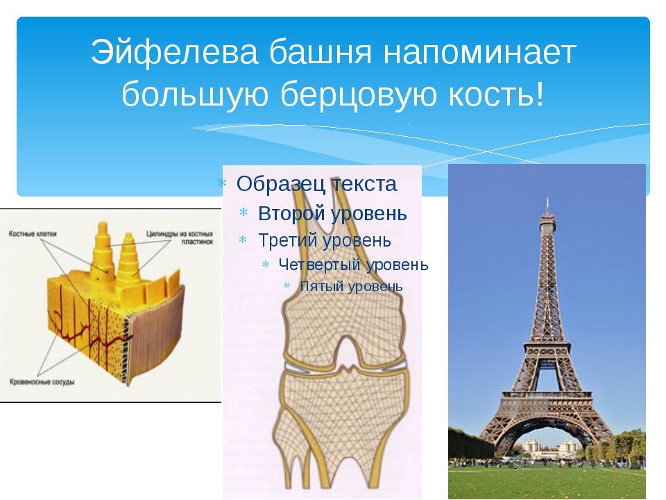 Эйфелева башня напоминает большую берцовую кость!