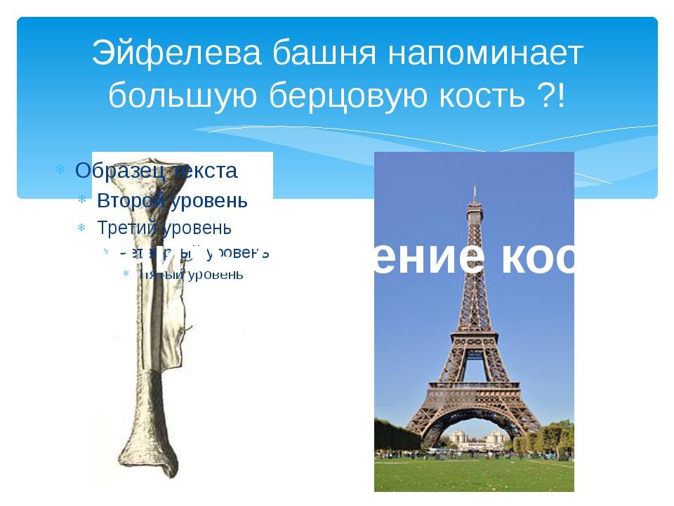 Эйфелева башня напоминает большую берцовую кость ?! Изучить строение кости