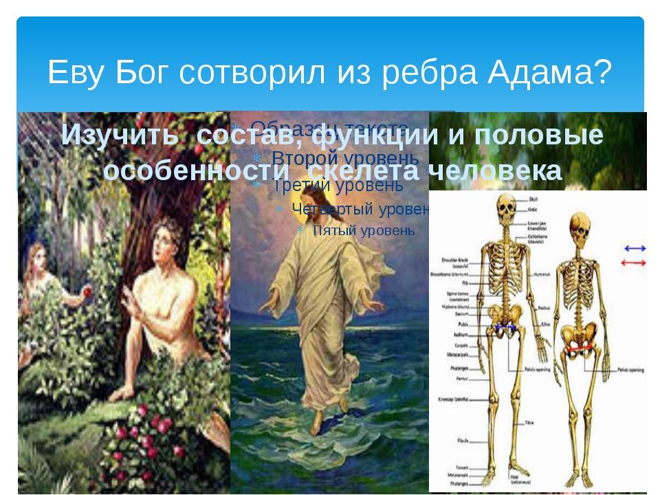 Еву Бог сотворил из ребра Адама? Изучить состав, функции и половые особенност...
